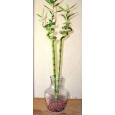 Spiral Bambu İthal 50 Cm