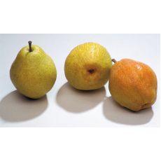 Armut Fidanı Margarit Meyve Verir Durumda