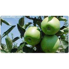 Elma Fidanı Granny Smith Gransimit 120-140 Cm