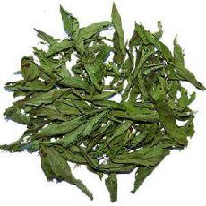 Şeker Otu Fidanı Stevia Saksıda 15-25 Cm