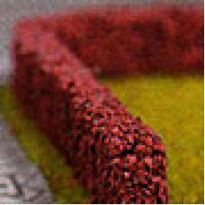 Berberis Kadın Tuzluğu Thunbergii Red Rocket 30-40 Cm