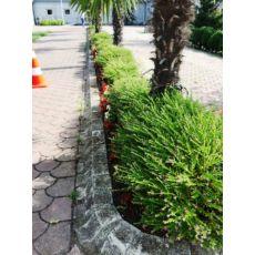 Hediyelik Nikah Çamı Kufeya Cennet Çiçeği Mor Çiçekli 50 Adet Fiyatımız