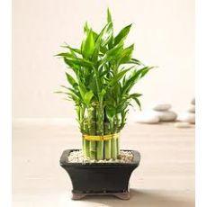 Set Bambu Katlı Bambu İthal 3 Katlı 20-25 Cm