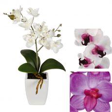 Orkide Çiçeği İthal 0rchidee Tek Dallı