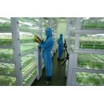 Doku Kültürü İle Üretilen Meyve Fidanı Ve Bitkilerimiz