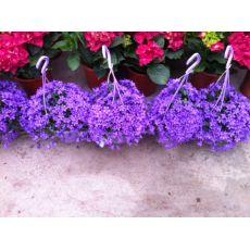 Kampanula Çiçeği İthal Campanula Askılı Saksıda 25-35 Cm Çapı