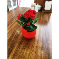 Hediyelik Nikah Çamı Kardeş Kanı Çiçeği Kan Kardeş Çiçeği İthal Kalanchoe 50 Adet Fiyatıdır