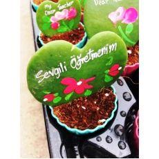 Öğretmenlere Sevgili Çiçeği Kalp Şekilli Bitki hoya kerri İthal
