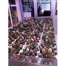 Kaktüs Aşısız Cactus 15 Cm