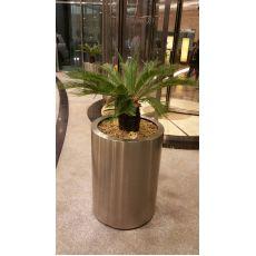 Sikas Cycas Revoluta 60 Cm Yapraklı Boyu