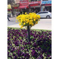 Hercai Menekşe Viola Tricolor 45 Adet Fiyatımızdır