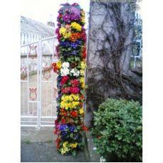 Çuha Çiçeği 10 Adet Fiyatımızdır Primula