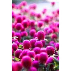 Medine Düğmesi Hanım Kadın Düğmesi Çiçeği 45 Adet Fiyatımızdır