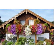 Petunya Çiçeği Petuinen 45 adet Fiyatıdır
