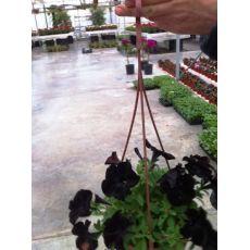 Petunya Çiçeği Askılı Saksıda Siyah Çiçekli