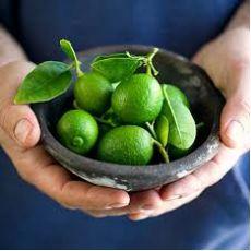 Misket Limonu Fidanı Mexican Lime