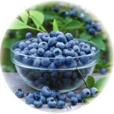 Yaban Mersini Fidanı Blue moon Likapa  Blueberry