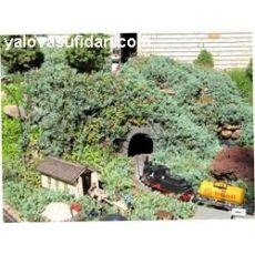 Mavi Ardıç juniperus Horizantalis Glauca Blue Carpet 30-40 Cm