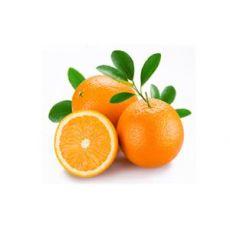 Portakal Fidanı  80-100 Cm