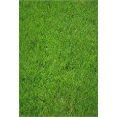 Çim Tohumu Bahçe Çimi Tohumu İthal 6 Karışımlı 1 Kg Fiyatımızdır