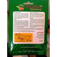 Biber Tohumu Kandil Dolma Pakette 10 Gram Sertifikalıdır