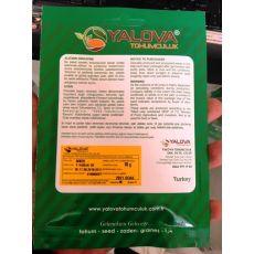 Biber Tohumu Kırmızı Yalova Yağlık 28 10 Gram Sertifikalı