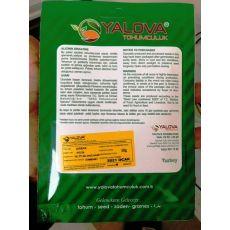 Kabak Tohumu Beyaz Sakız Çeşidi Pakette 10 Gram Sertifikalıdır