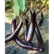 10 Adet Patlıcan Fidanı Uzun Patlıcan