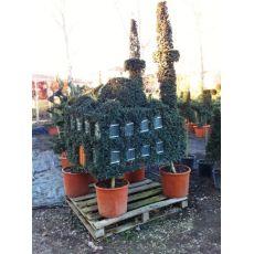 Camii Figürlü Bitki Ligüstrüm Lüküstürüm ligustrum Jonandrum 175-200 Cm