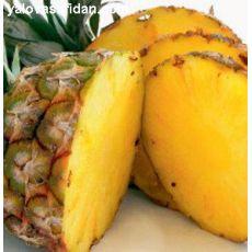 Ananas Fidanı Meyvesiz 25-30 Cm