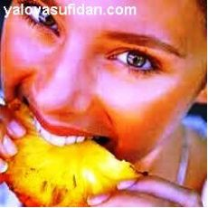 Ananas Fidanı İthal Meyveli 40-45 Cm