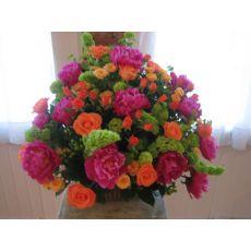 Şakayık Çiçeği aeonia Suffruticosa